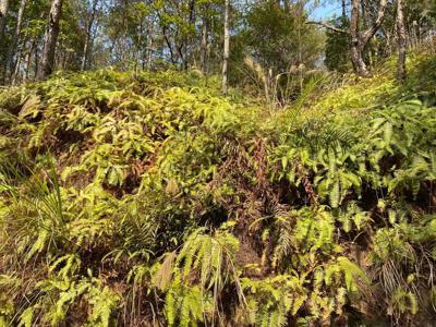 神秘的蕨类植物 你永远不知道下一脚多深.jpg