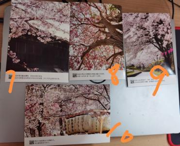 樱花-续.jpg